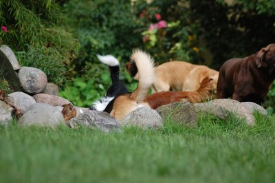 Hunde vom Hotel Palstek