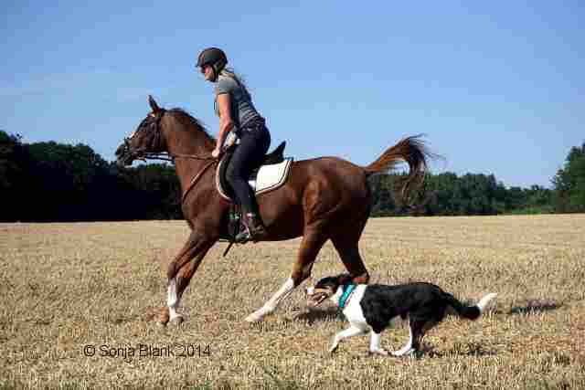 slide Hund und Pferd
