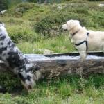 2 Hunde an der Tränke