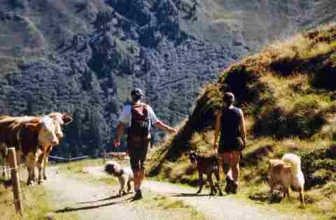 Bergwandern mit Charly und Tinka