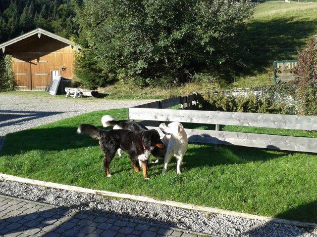 0001-12 Blickner-Alm Hunde im Garten