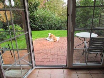 0012-03 Obsthof Schroeder Hund im Garten