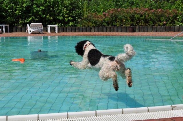 0029-06 Seehotel Moldan Hund beim Sprung in den Hundepool