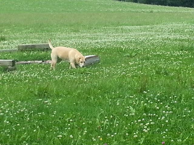 0063-04-Landhaus-Wildschuetz-Hund im Garten