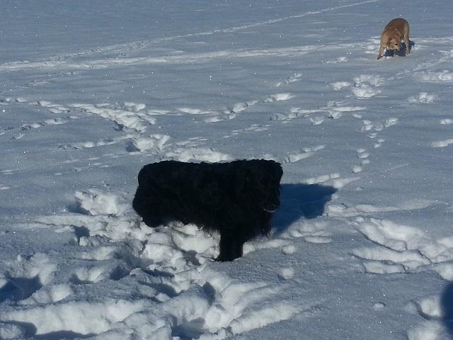 0063-06-Landhaus-Wildschuetz-Hunde im Schnee