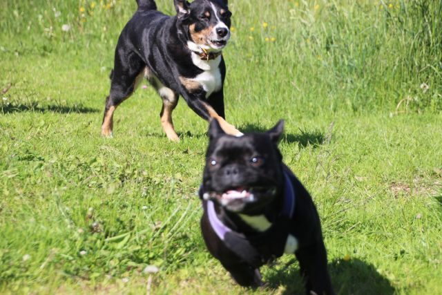 0077-06 Hotel Sportalm Hunde im Spiel