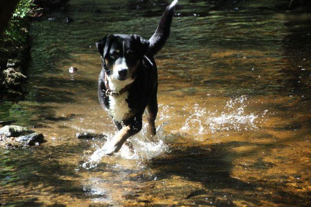 0077-10 Hotel Sportalm Wasserhund