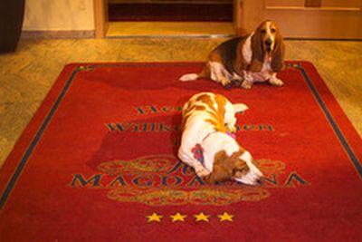 0089-06-Hotel-Magdalena-Hunde-am-Empfang