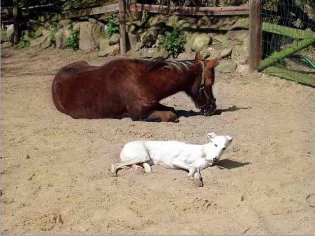 0111-05 Fewo Rothensande Pferd und Hund im Paddock
