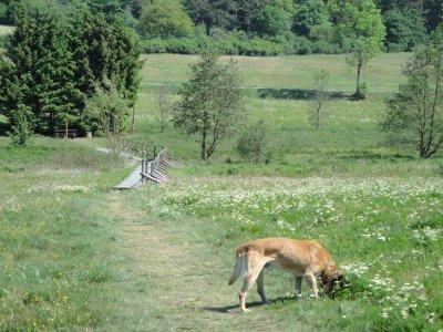 0186-08 Ferienwohnung Kopp Hund auf der Wiese