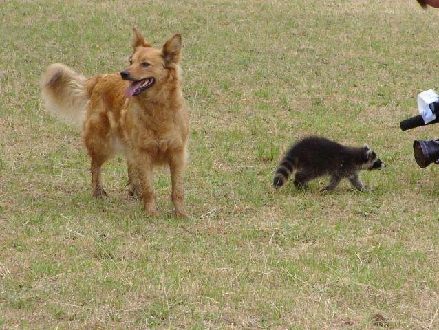 0236-04-Weinberghof-Hund beim Spiel