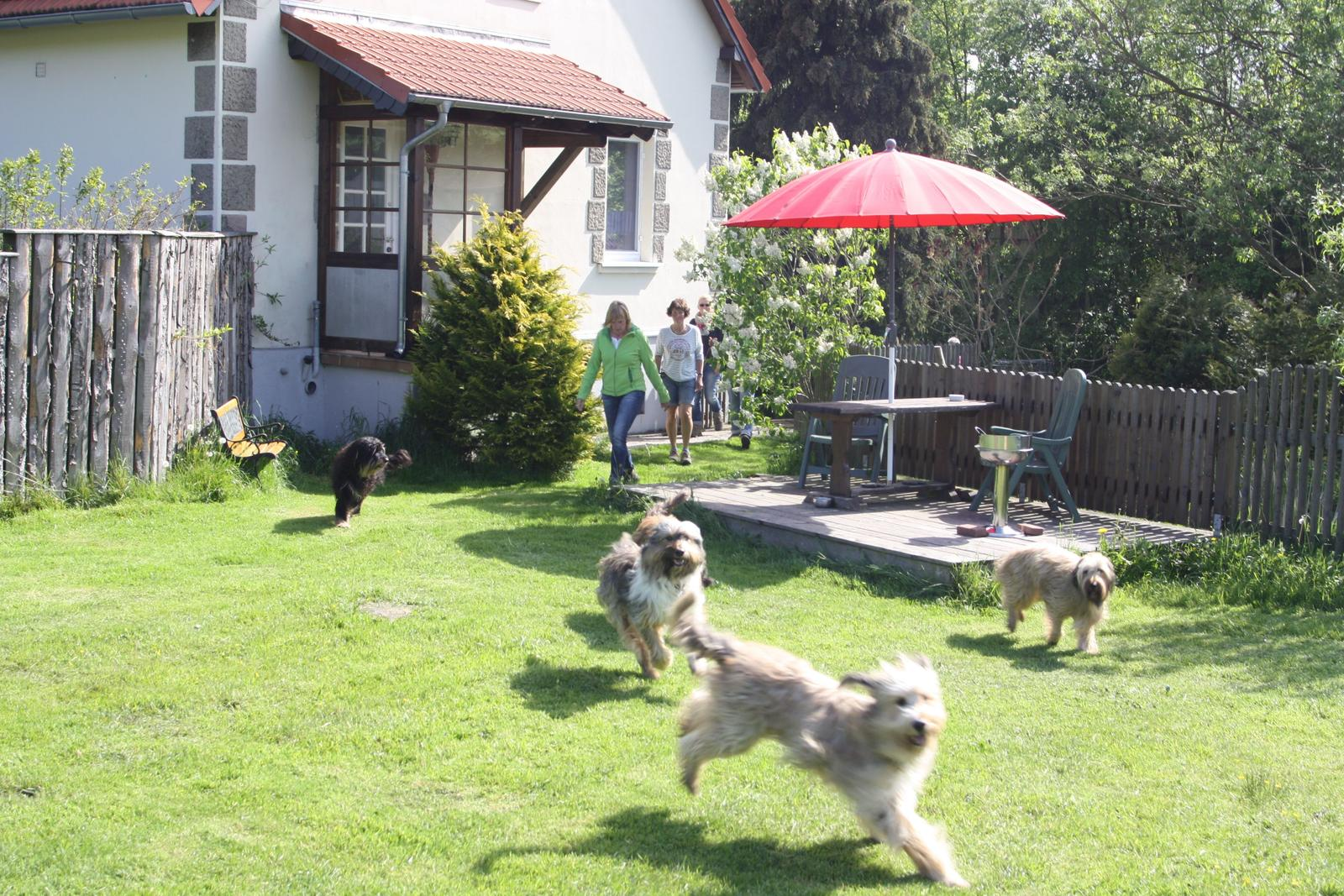 0247-02 Ferienhäuser Rieger Hunde im Garten