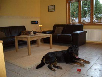 0260-05 Haus Seestern Wohnzimmer mit Hund