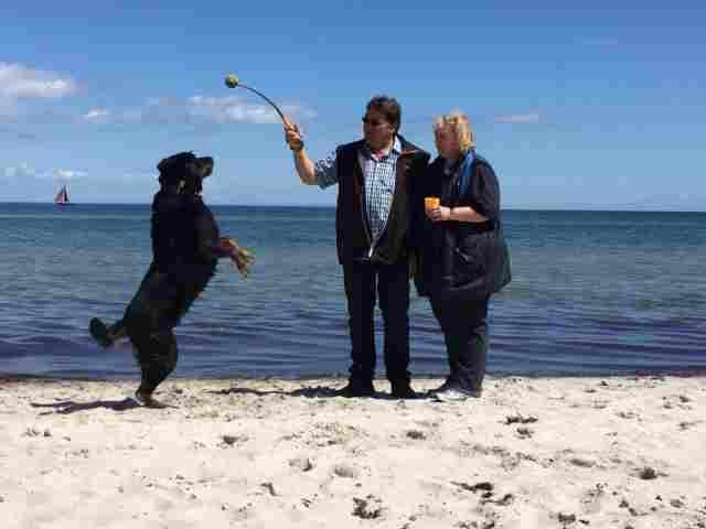 0260-13 Haus Seestern am Strand mit Hund