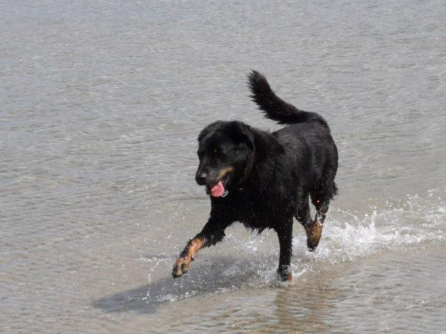 0260-14 Haus Seestern Hund im Wasser