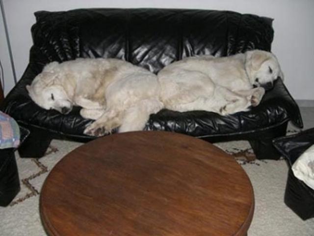 0310-07 Ferienhaus Haas Hunde