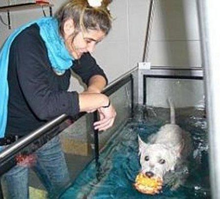 0316-09 Amys Wohlfuehlvilla Hundephysio