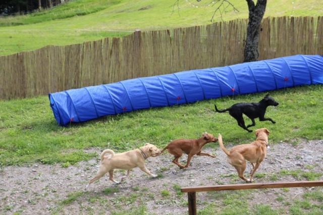Hundespielplatz mit Tunnel