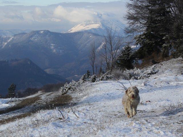 0371-10-Steinschalerhof-Hund-Paula-im-Schnee