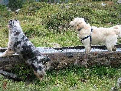 W 004-03 Hundewandern zwei Hunde an Traenke