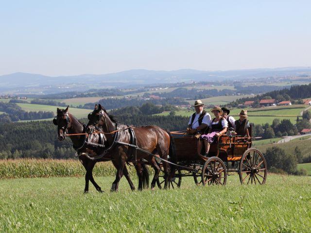 0008-16 Gut Feuerschwendt Rottaler Pferde vor historischer Kutsche