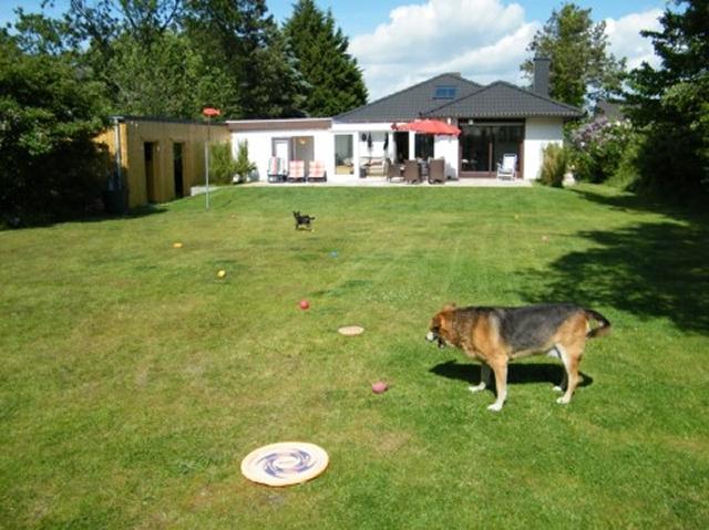0418-02-Ferienhaus-Blinkfuer-104-Garten-mit-Hund