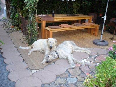 0474-03 Bertls B und B Hunde