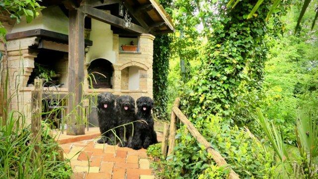 0475-07-Casa-Cuculo-Hunde im Garten