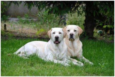 0483-03 Usedom Traumurlaub Hunde im Garten