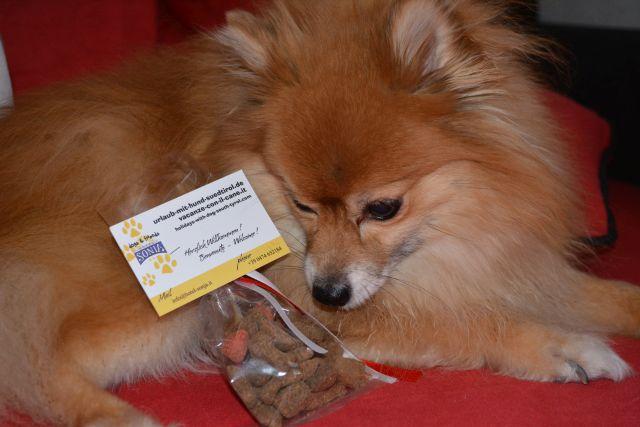 0486-17-Hundehotel-Sonja-Urlaub-mit-Hund