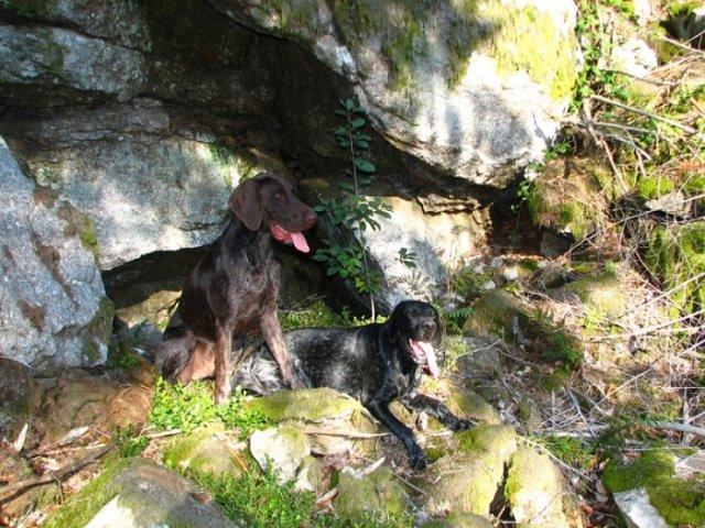 0496-04-Fewos-Ranzinger-Hunde-1