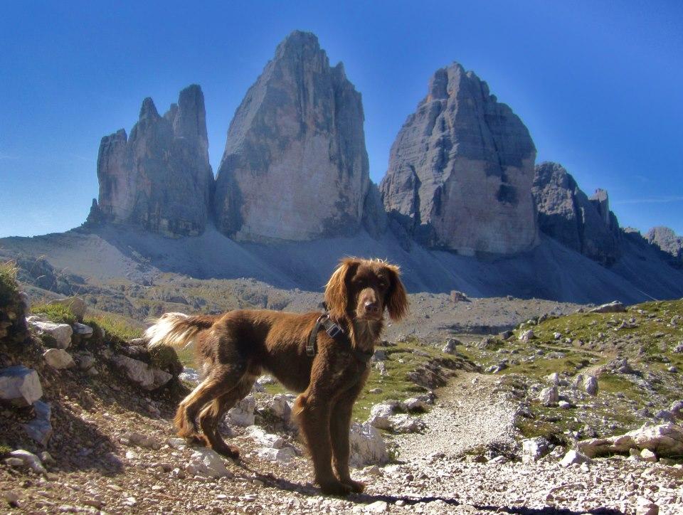 4. Platz -  Bennie Hund mit den drei Zinnen