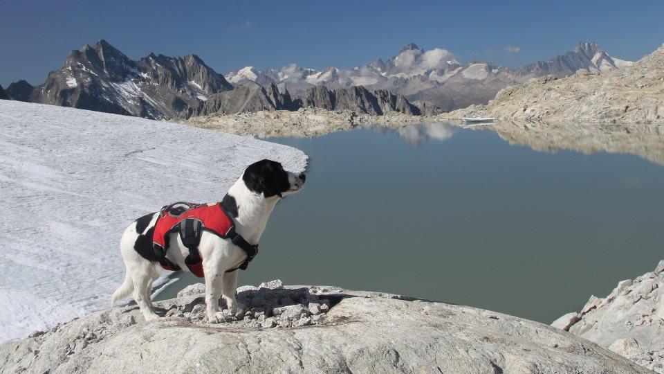 7. Platz - Nora SummitDog - Ausblick vom Gerenpass auf die Berner Alpen