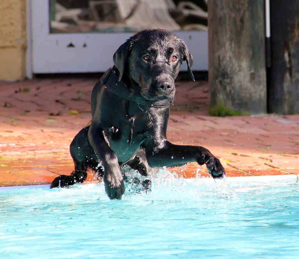 Fin Wart - Fin beim Sprung in den Pool 03