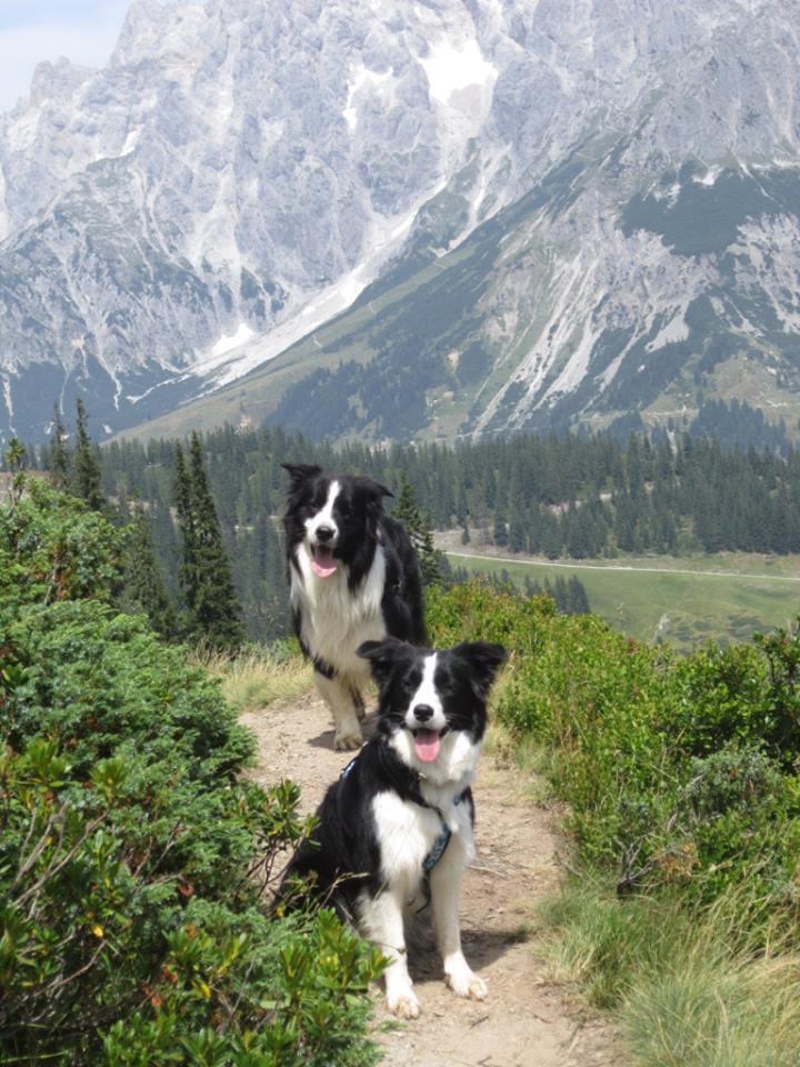 Heide Sänger - Sam und Kiwi beim ersten Wanderurlaub in Mühlbach-Salzburg 01