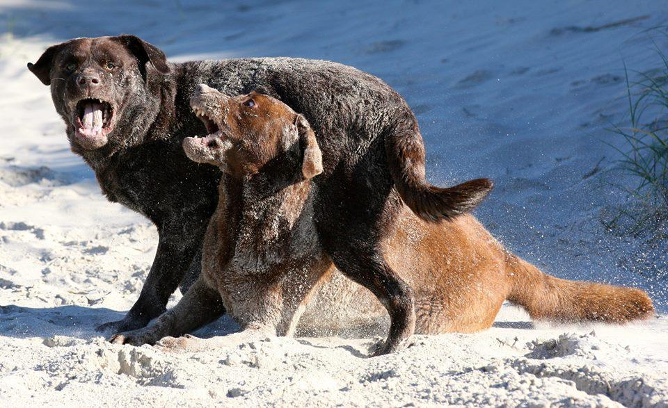 10. Platz: Bear und Clay am Strand von St. Peter-Ording