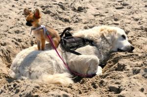 Platz 01 - Gaby Ritzerfeld - Elmie und Sunshine am Strand in Bredene