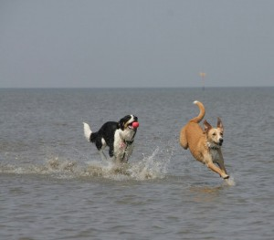 Platz 09 Sven Heidbrink - Amy und Nika in Cuxhaven im Meer