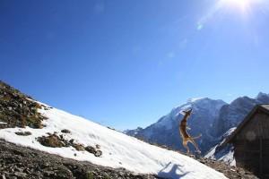 Platz 11 Don Finnito El Doggo - Luftsprung nach einem Schneeball am Ortler