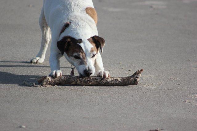 0539-13-Gaestehaus-Uthoern-Hund am Strand