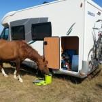 pferd20140715_152523