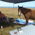 pferd20140716_132443