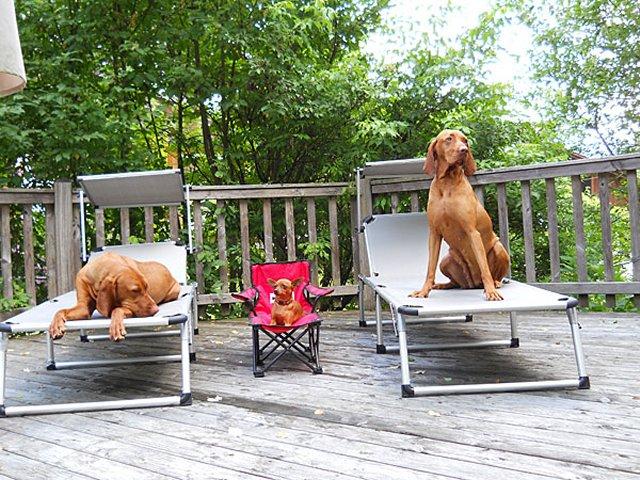 Hunde beim Chillen