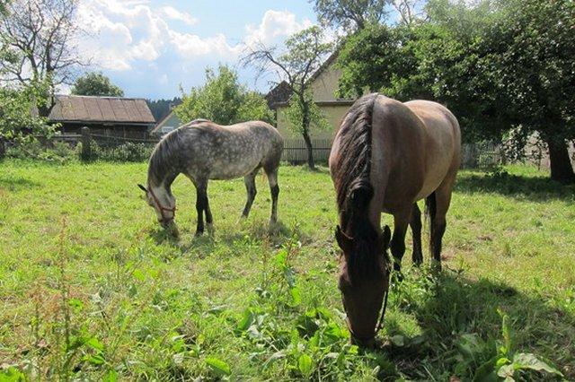 0548-04 Ferienwohnungen Gradlhof Urlaub mit Hund und Pferd