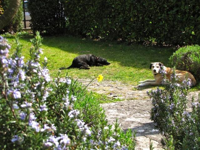 0551-04 Ferienhaus Rustico Bell Aria unsere Beiden Hunde im Garten