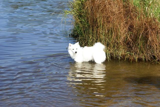 0560-04 Ferienwohnung Ulrichsgruen Hund am See