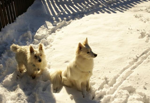 0560-05 Ferienwohnung Ulrichsgruen Hunde im Schnee