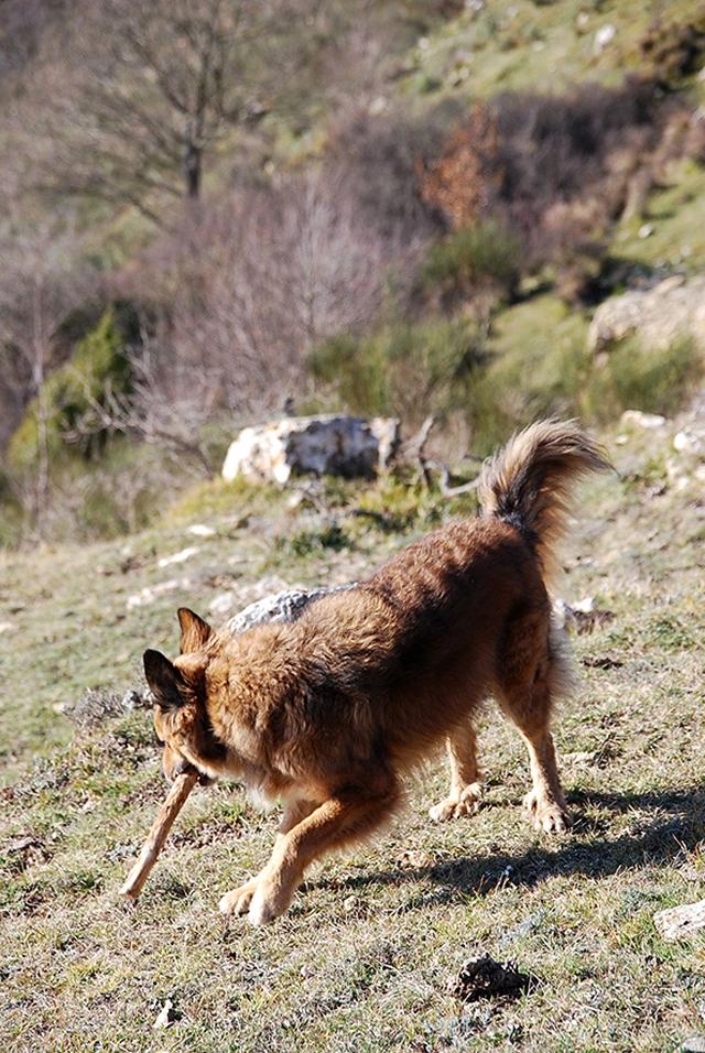 0568-03-Ferienwohnungen-Casa-Capinera-Hunde-beim-Spielen