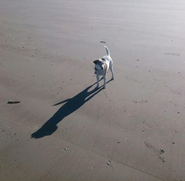 Hund im Watt