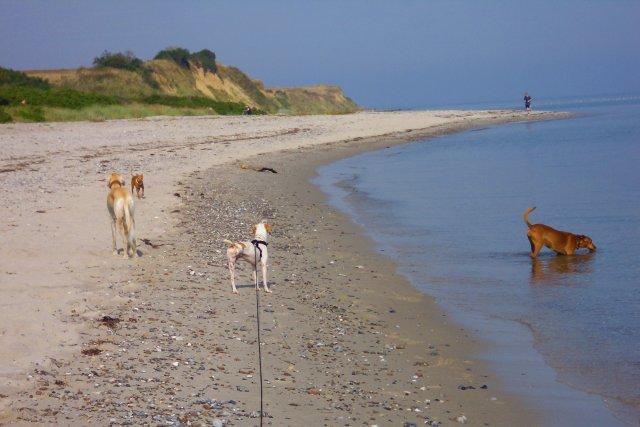 0579-05 Ferienwohnung-Hundeglueck-Family-Hundestrand
